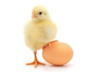 Rüyada yumurta görmek, 16 ilginç tabiri mutlaka oku!