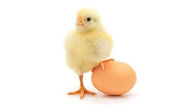 ruyada yumurta gormek 5