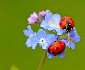 rüyada böcek görmek nedir 15 detayla ayrıntılı tabir