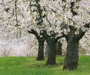 rüyada ağaç görmek hakkında 17 ilginç tabir
