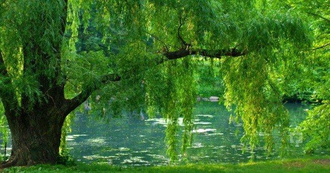 rüyada ağaç görmek 6