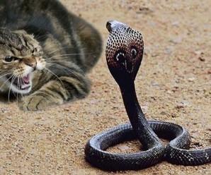 rüyada yılan öldürmek üzerine 10 ilginç tabir