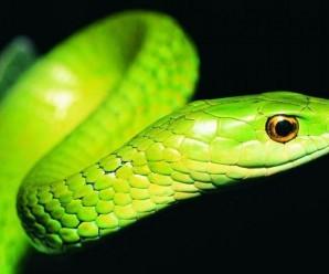 rüyada yeşil yılan görmek ile alakalı 7 ilginç tabir