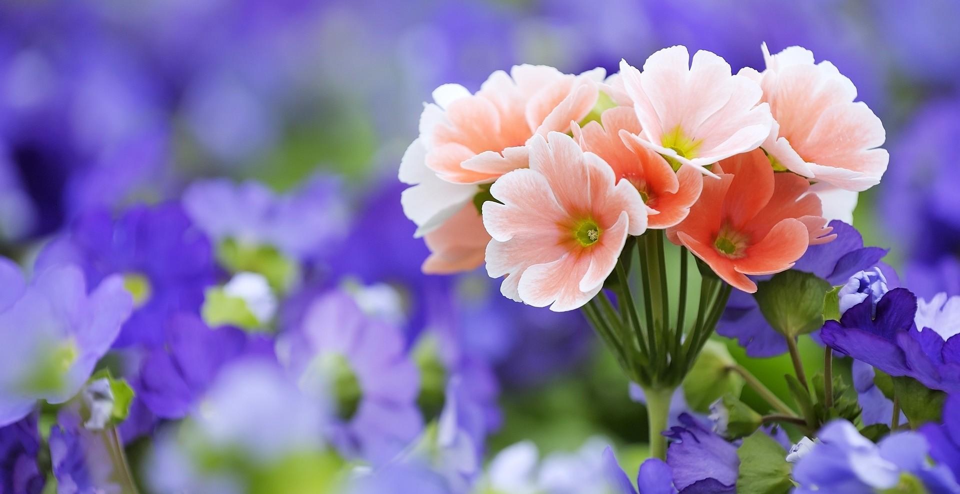 rüyada çiçek görmek 1