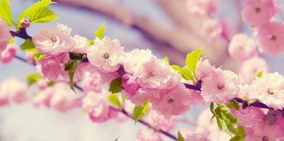 rüyada çiçek görmek 11