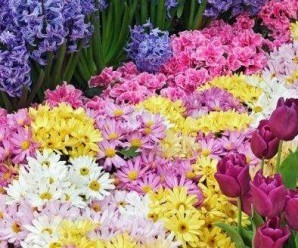 rüyada çiçek görmek üzerine 14 şaşırtıcı tabir