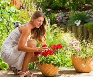 rüyada çiçek toplamak hakkında 14 şaşırtıcı tabir