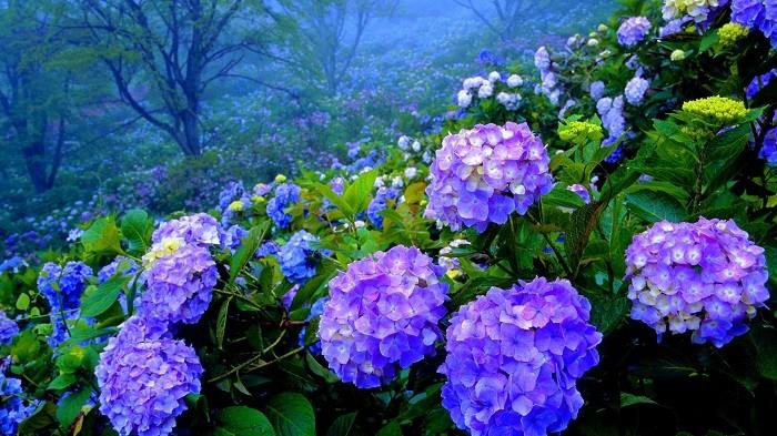 rüyada çiçek toplamak 2