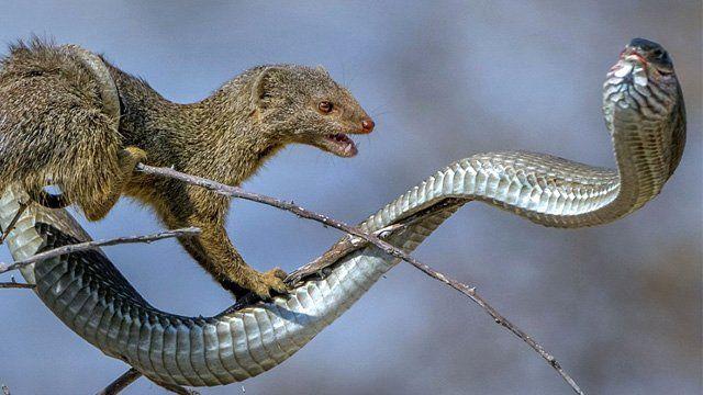 rüyada yılan öldürmek 4