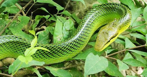 rüyada yeşil yılan görmek 2